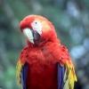 MacawHon2004_ab