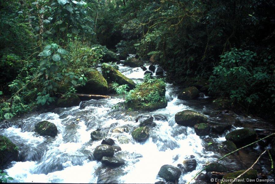 2StreamLosKetsalastrailBoguettePan.2003_ab