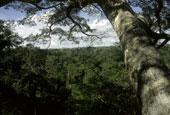 AmazonianCanopy_ab